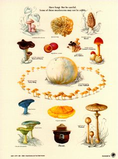 Classic design depicting fungi / mushrooms and an educational message from Smokey the Bear. The text reads: Have fungi. but be careful. Poster is in Mushroom Art, Mushroom Fungi, Smokey The Bears, Nature Posters, Poster Series, Art Textile, Wild Edibles, Nature Journal, Edible Plants