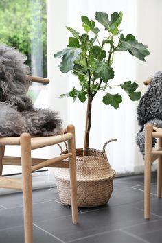 Fikonträd i Korg från Bloomingville. Trendenser.se - en av Sveriges största inredningsbloggar