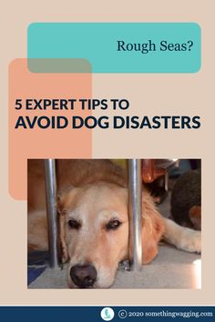 How do you keep your dog happy, safe, and comfortable in rough seas? Follow these expert tips from a cruiser who sailed 7000 nm with her pups. Sailboat Living, Living On A Boat, Dogs On Boats, Sport Fishing Boats, Rough Seas, Weather Information, Kinds Of Dogs, Beagle Puppy, Pet Travel