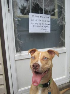 Dog Shaming features the most hilarious, most shameful, and never-before-seen doggie misdeeds. Join us by sharing in the shaming and laughing as Dog Shaming reminds us that unconditional love goes both ways. Funny Dog Memes, Funny Animal Memes, Funny Animal Videos, Funny Dogs, Cute Dogs, Funny Animals, Cute Animals, Baby Animals, Dog Funnies