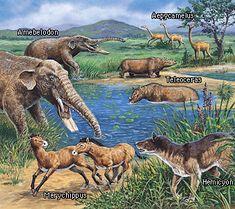 cenozoic animals - Google Search