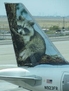 Frontier Airlines Airbus A319-111 N923FR 'Rudi the racoon'