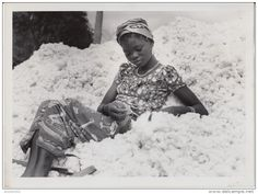 Cotton field, Belgian Congo, 1953 \ © of H. Belgian Congo, Architecture People, Cotton Fields, Art Society, Black Image, Tribal Art, Black People, Character Inspiration, Photos