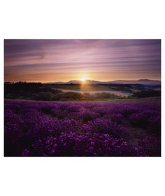 Buy Graham & Brown Lavender Sunset Wall Art at Argos.co.uk - Your Online Shop for Pictures and wall art.