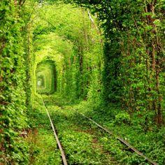 The tunnel of trees, Rivne, Ukraine
