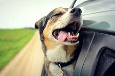 Maximum Dog Love