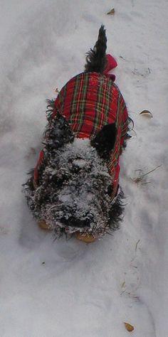 Scottie ~ Merry Christmas! from ♡ StoneArtUSA.com ~ affordable custom pet memorials for everyone