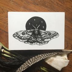 Listed this lady to my #etsy shop earlier than I had originally planned: Emperor Moth Print | Pen and Ink Scientific Illustration Print http://etsy.me/2CMBDhj #art #printmaking #black #natureprints #homedecor #snakeart #witchy #natureprint #occult