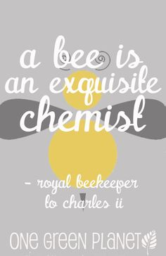 Why Bees Are Important to Our Planet http://onegr.pl/1iEYbzD #savethebees