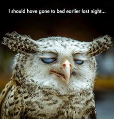 In The Morning Before #Coffee. #Owls #Coffee #Humour www.monashgroup.com.au