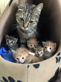 Mama cat and her kittens :-) Cute Cats And Kittens, I Love Cats, Crazy Cats, Kittens Cutest, Kittens Meowing, Fluffy Kittens, Pretty Cats, Beautiful Cats, Animals Beautiful