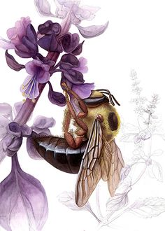 Carpenter Bee by ChristieNewman http://ChristieNewman.deviantart.com/art/Carpenter-Bee-138018624