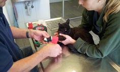 Neuer Verband für meine gebrochene Pfote Cats, Animals, Gatos, Animales, Animaux, Animal, Cat, Animais, Kitty