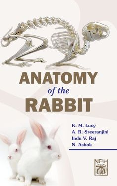 Artstation animal anatomy charts alicia poon muscles anatomy anatomy of the rabbit by k m lucyhttpamazon ccuart Gallery