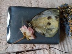 Brooch, real butterfly, real flower in resin di vimade su Etsy