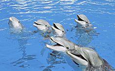 Maailmankuulu Loro Parque -eläintarha on seikkailu niin aikuisille kuin lapsillekin. www. Tenerife, Smil, Fish, Animals, Spain, Animaux, Animal, Animales, Teneriffe