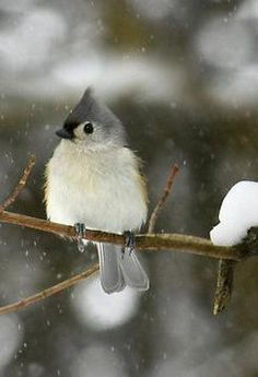 Another reason to move to England... So I can see these everyday!!!! They are the cutest little birds ever. I wish I could have one