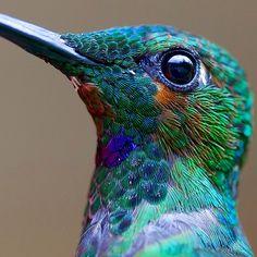 a2014-8-31cute-beautiful-hummingbird-photography-1.jpg