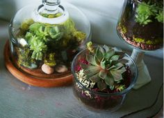 Indoor Garden - How to Build a Terrarium Loving Leafy Greens Clustered on a tabletop, a collection of thrift store glass gets a new lease on life as an indoor garden. Footed compotes, wineglasses, bowls, and jars all have equal opportunity, as seen on Saved By Love Creations.