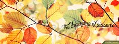 Changing of Seasons Fall Quote Image - Pretty Fall Image - Beautiful Autumn… Fall Cover Photos, Fall Facebook Cover Photos, Facebook Timeline Photos, Christmas Facebook Cover, Facebook Timeline Covers, Fall Photos, Photo Wallpaper, Flower Wallpaper, Pics For Fb
