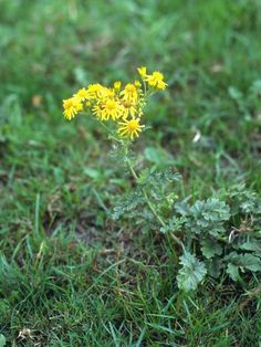 Find out how to combat the weeds that grow best when air is on the cool side.