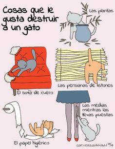 cosas que le gusta destruir a un gato = dingen waar een kat van houdt om te vernietigen
