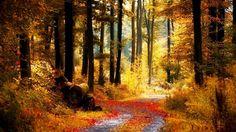 Image from http://www.desktopaper.com/wp-content/uploads/beautiful-landscape-wallpapers-autumn.jpg.