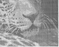 "Gallery.ru / elypetrova - Альбом ""242"""
