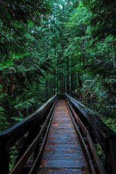 Photo by Yoshi Takekawa on Unsplash Landscape Photography, Nature Photography, Travel Photography, Beautiful Nature Wallpaper, Beautiful Landscapes, Beautiful Places, Beautiful Pictures, Forest Wallpaper, Nature Aesthetic