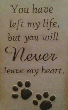 You have left my life, but you will NEVER leave my heart - RIP all of my beloved cats who have gone to the Rainbow Bridge! All Dogs, I Love Dogs, Puppy Love, Yorkies, Chihuahuas, Pomeranians, Cotton De Tulear, Pet Loss Grief, Loss Of Pet