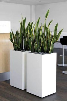 You will find some great office plants ideas for your working space here. We promise we did our best in finding you great office plants ideas… Indoor Garden, Garden Pots, Home And Garden, Potted Plants, Indoor Plants, Plant Pots, Large Indoor Planters, Plant Design, Garden Design