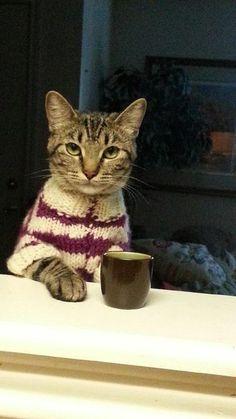 真剣なお話がある猫