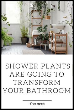 Not only do these humidity-loving houseplants clean the air and eliminate bacteria naturally, but these bathroom plants add a chic vibe and a touch of nature to your space without you lifting a finger—you never have to remember to water them. Whether you sit them on the tub, put them in the window or have them hanging on your curtain rod, DIY one of these no light, indoor, low upkeep plants and feel like you're one with the great outdoors.
