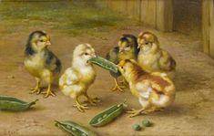 Edgar Hunt ~ Baby Chicks Tug of War ~ Chickens ~ Barnyard Cross Stitch Pattern Chicken Painting, Chicken Art, Chicken Tattoo, Gravure Illustration, Illustration Art, Illustrations, Farm Animals, Cute Animals, Chicken Pictures