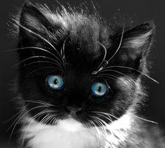 Love cats. Really.