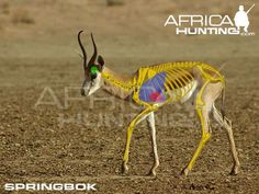 Grands gibiers africains - Le blog de Alex.bowhunter Africa Hunting, Giraffe, Elephant, Impala, Kangaroo, Animals, Badger, Dog, Game
