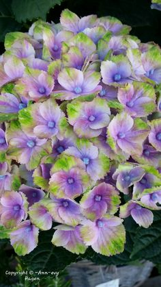 My Flower, Flowers, All Pictures, Annie, Plants, Plant, Royal Icing Flowers, Flower, Florals
