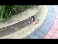 """(video) (link) 3D STREET ART: Chalk Art by David Zinn ~  walkaround view of """"Secret Admirer"""" - YouTube ~ for more great PINs w/good links visit @djohnisee ~ have fun!"""