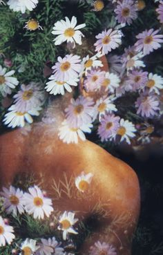 (Nothing But) Flowers, Thales Pessoa