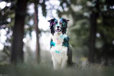 Psy, Dogs, Photography, Classy, Animals, Instagram, Youtube, Photograph, Animales