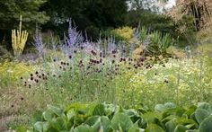Image result for beth chatto gardens