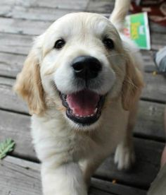 now tell me this isn't a puppy laugh!!