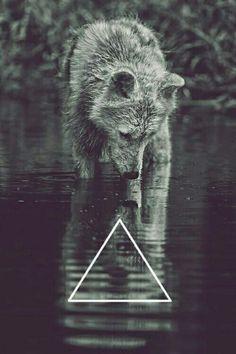 Wolf :3