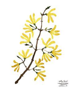 Forsythia branche imprimer estampes botaniques par GollyBard