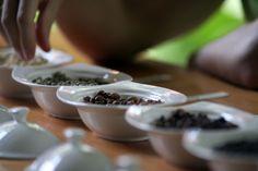 """""""Von der Bohne bis zur Tasse Kaffee"""" lautet das Thema einer regelmäßigen Führung für die Gäste der Arusha Coffee Lodge. Anbau verschiedenster Kaffeesorten, unterschiedliche Entwicklungsstadien der Bohnen, Ernte, Lagerung und Röstung sind die wesentlichen Aspekte dieses interessanten Programms, das natürlich mit einer Kaffeeprobe endet. © Foto: Arusha Coffee Lodge, Elewana Collection"""