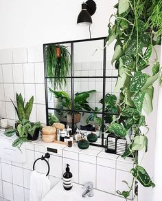 Beautiful Hanging Plants Perfect For Apartments - thebrownbraun for this post.The most beautiful indoor plants perfect for apartments. No green thumb required! These low maintenance plants are perfect for living rooms and e# Apartments Indoor Garden, Outdoor Gardens, Best Indoor Hanging Plants, Indoor Plant Decor, Plantas Indoor, Belle Plante, Boho Home, Low Maintenance Plants, Cool Plants