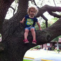 Tessa Monkey in a tree.