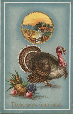 Thanksgiving Greetings Turkeys Postcard