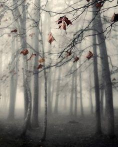 fall photography nature photography landscape fog mood