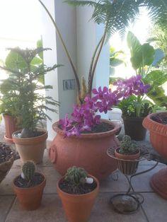 Orquídea y cactus